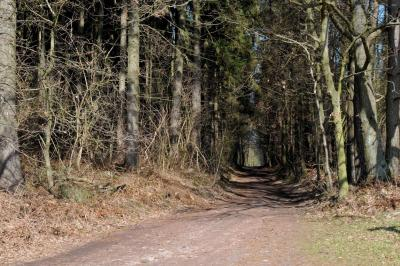 Waldwege bei Schwerin thumbnail